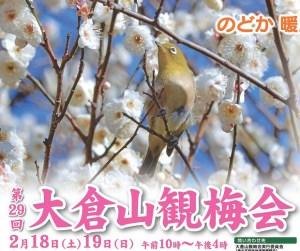 今年で29回目を迎える大倉山観梅会のポスター(港北区役所の特設ページより)