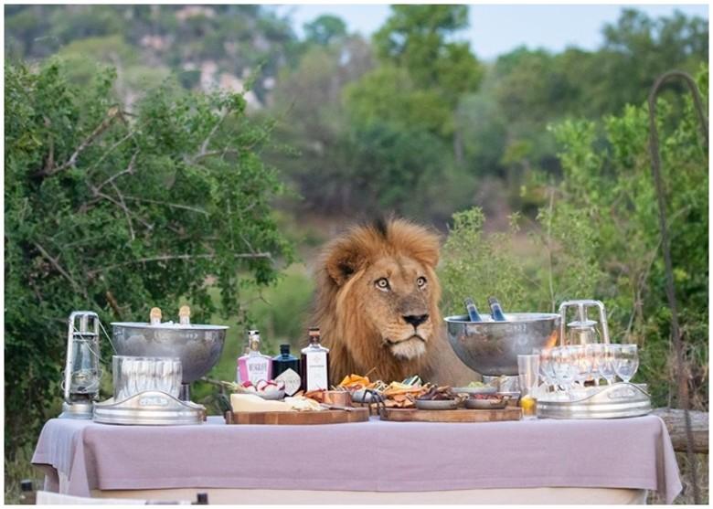 美食芳香撲鼻 猛獅不請自來嚇得遊客走開|即時新聞|國際|on.cc東網