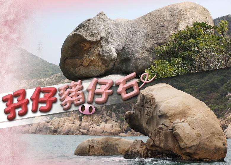 搜查線:香港石頭記 尋趣怪肥豬石 - 時事娛樂 - 著數街討論區