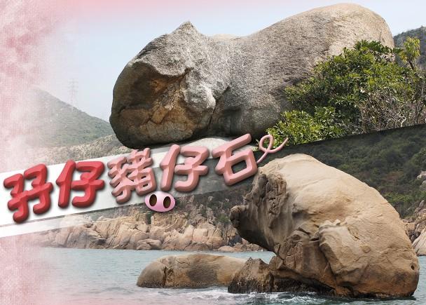 搜查線:香港石頭記 尋趣怪肥豬石|即時新聞|港澳|on.cc東網