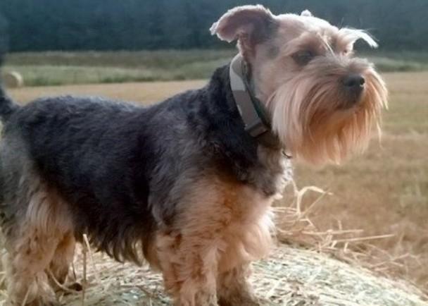 一隻約瑟爹利犬及蘇格蘭短毛貓確診 無出現病徵|即時新聞|港澳|on.cc東網