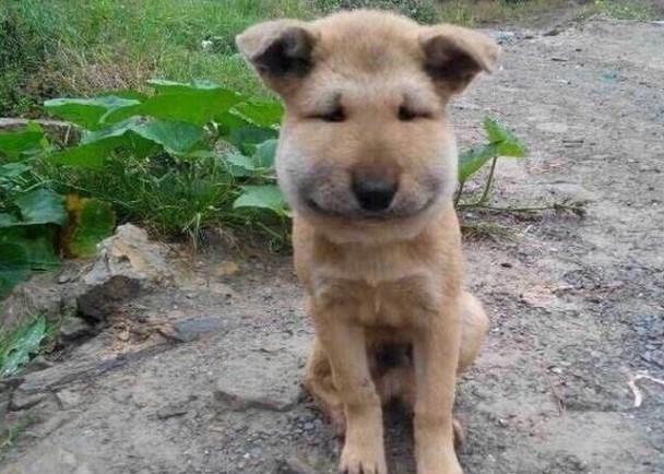 日本小狗慘遭蜂叮變豬頭 網友:笑到抽筋 即時新聞 國際 on.cc東網