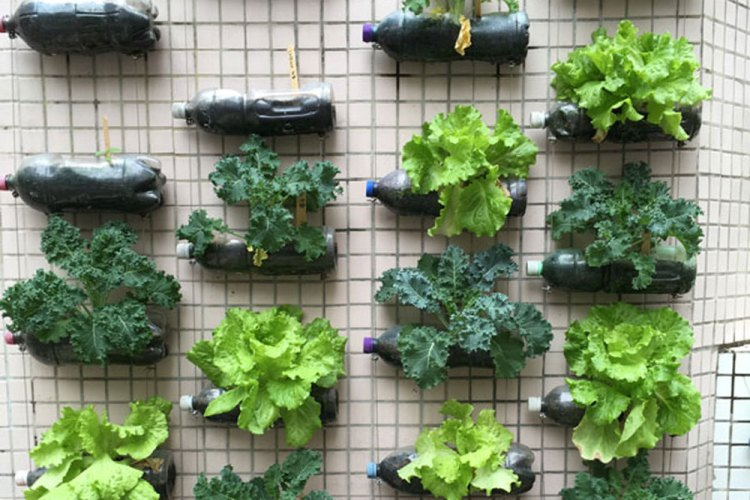 Salads on the edible wall at Hong Kong Baptist University