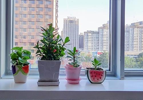 什麼樣植物擺放在窗臺是風水禁忌