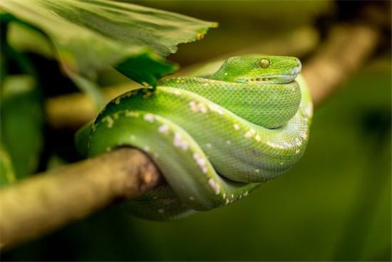 生肖蛇的成語故事