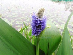 11 wetlandp may13