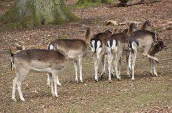 Wildpark Tiergarten Weilburg