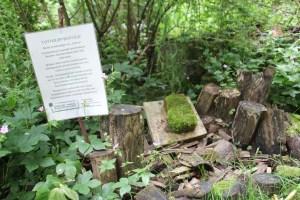 In diesem Totholzareal fühlen sich Asseln, Insekten und Spinnen sehr wohl.