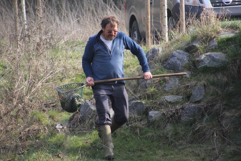 Gewässerwart Karl-Heinz Weber setzte heute morgen 150 Kilogramm Bachforelle aus.