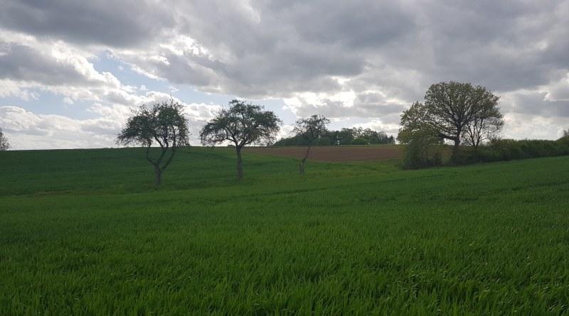 Radweg zwischen Elbtal und Dornburg