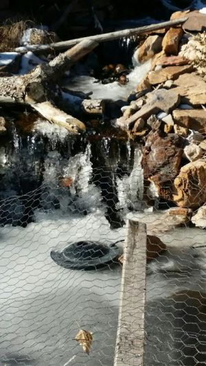 water-features-ponds-pond-care-albuquerque-albuq-abq-landscaping-company-residential-commercial
