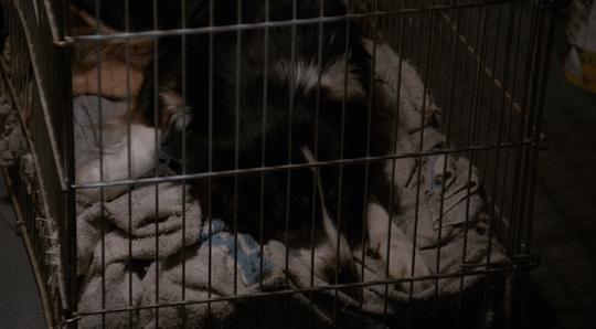The dog from earlier in the episode lies peacefully in his crate.