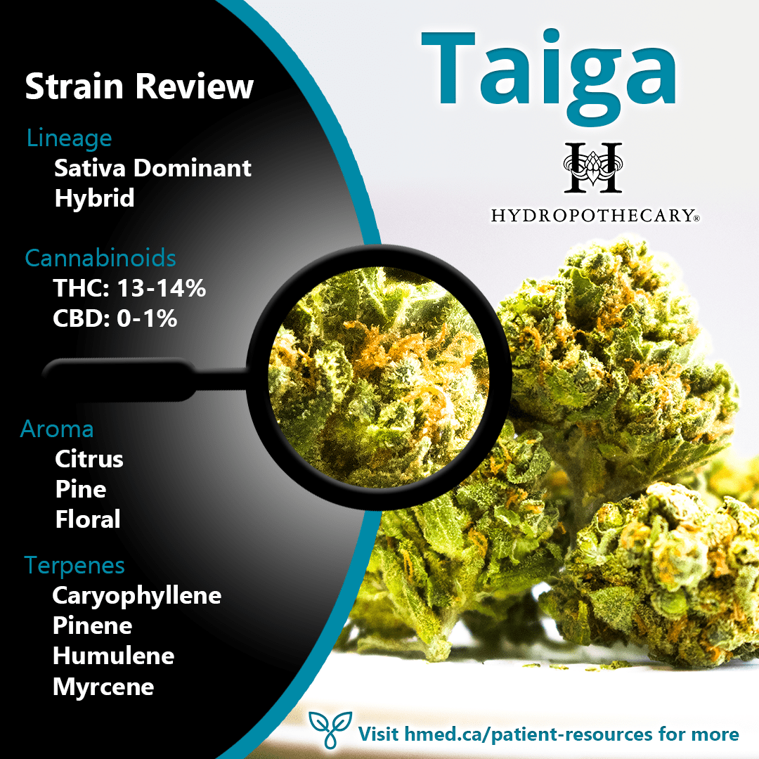 strain review taiga by