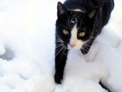 Snow Pooky