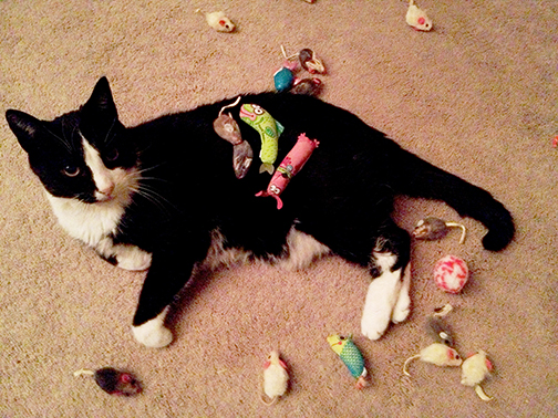 used-cat-toys-small