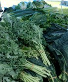 Kale, kale and more kale