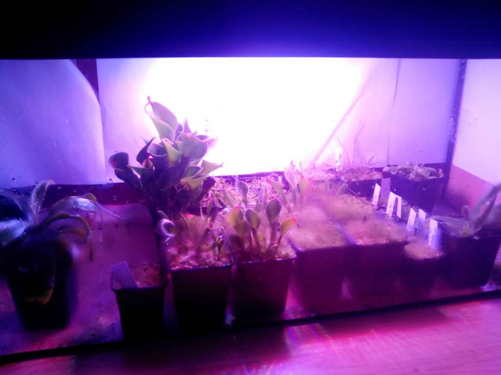 Led Grow Lights Ebay