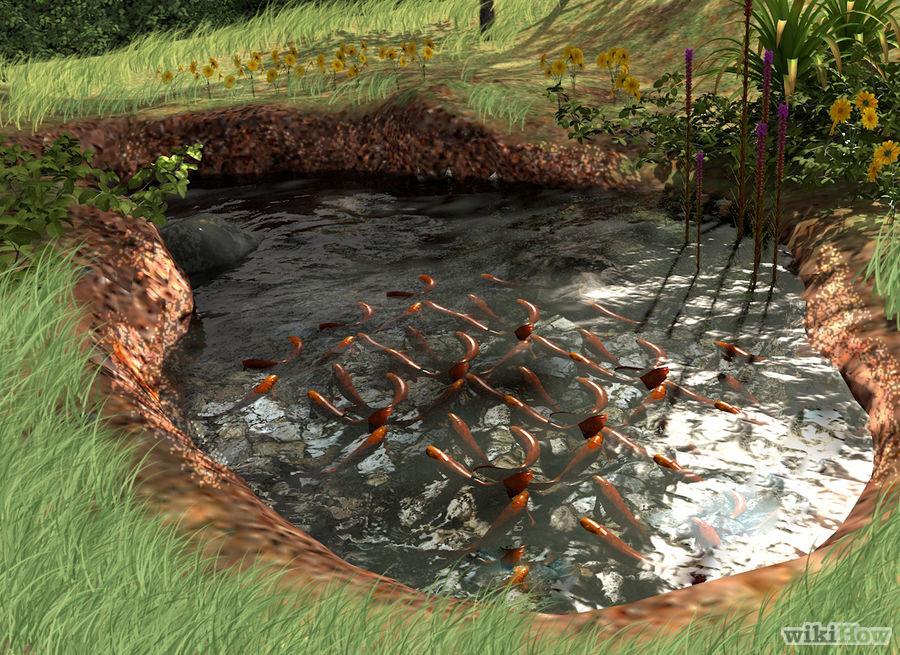 How Make Fish Pond