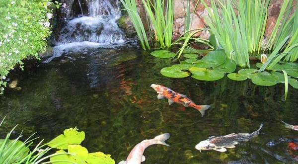 Easy Fish Pond Ideas