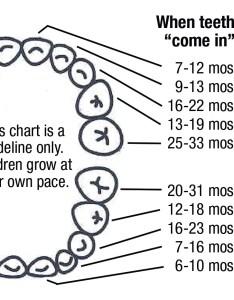 Baby teeth chart also health topic taking care of tiny unit haldimand norfolk rh hnhu