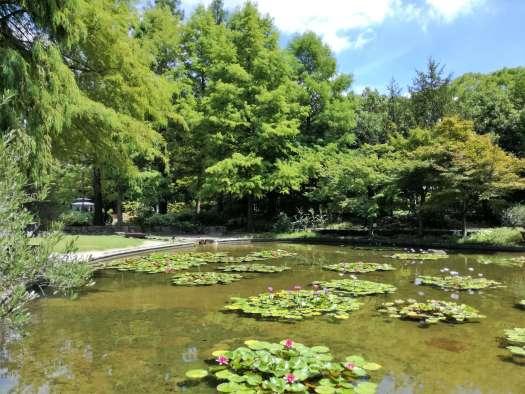 フラリエ睡蓮の池