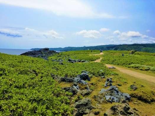 辺戸岬の草原