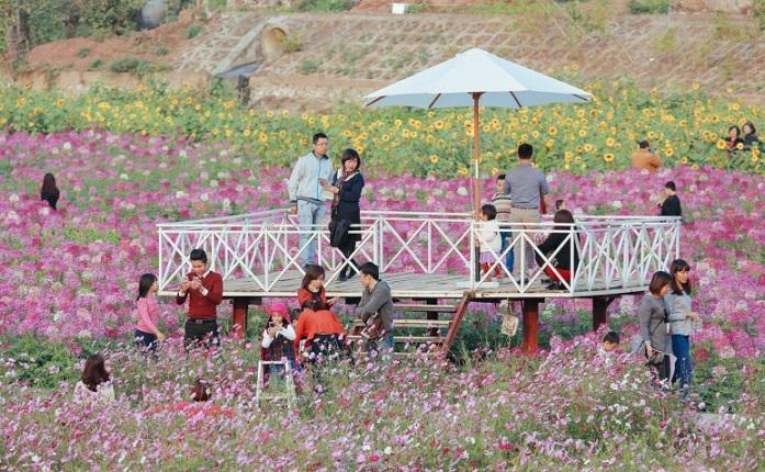 Hàng ngàn người đến ngắm hoa