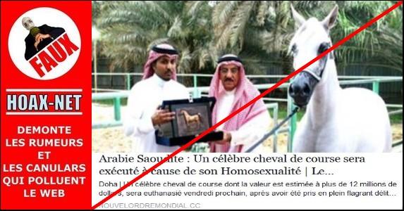Non,aucun cheval ne sera exécuté à cause de son homosexualité en Arabie Saoudite !