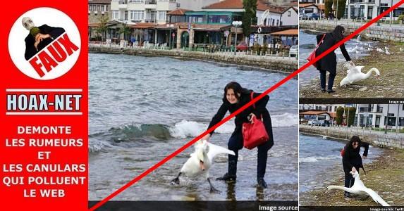 Non, une touriste bulgare n'a pas tué un cygne en prenant un selfie !