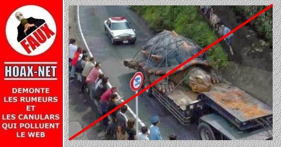 Non, ce n'est pas la photo d'une vraie tortue géante !