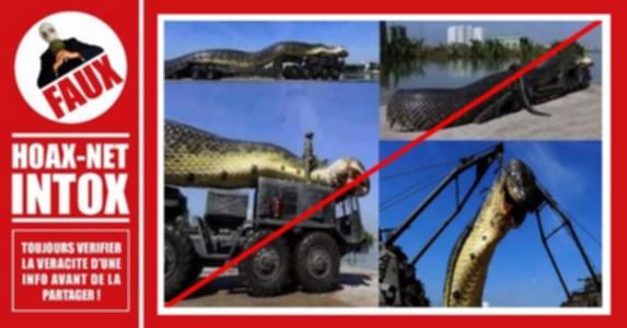 Le «plus grand anaconda du monde» n'était en réalité qu'une mise en scène !