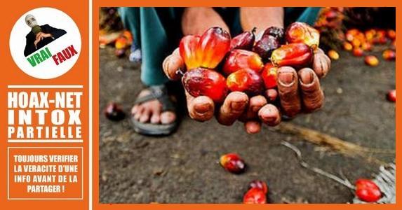 Petite mise au point sur la très controversée huile de palme.