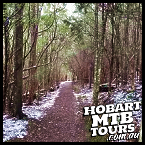 Ride Mount Wellington in Hobart