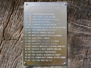 The plaque on the huge redwood cross-section in Fort Bragg.  The signing of the Declaration of Independence is 4th from the bottom.