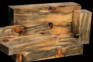 Monkey Puzzle Tree Wood