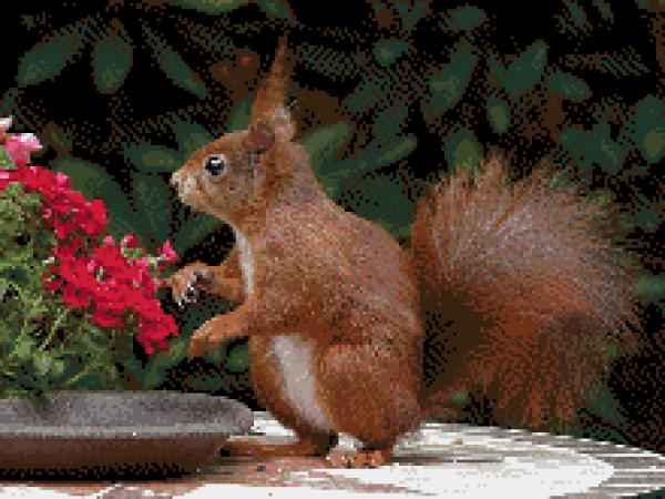 MyHobby borduurpakket - eekhoorn