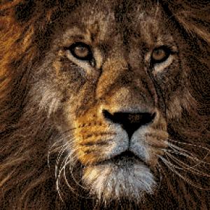 MyHobby borduurpakket - leeuw