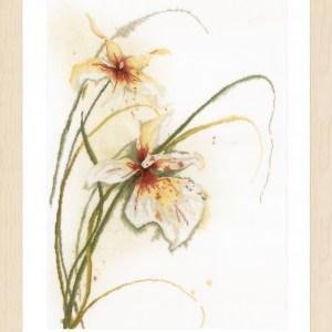 Lanarte Borduurpakket - Orchidee