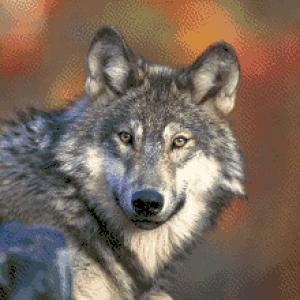 MyHobby borduurpakket - wolf