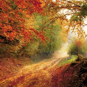 MyHobby borduurpakket - herfst in het bos