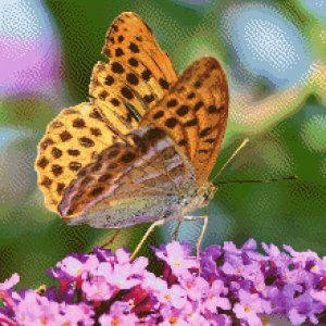 MyHobby borduurpakket - oranje vlinder