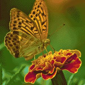 MyHobby borduurpakket - gele vlinder op bloem