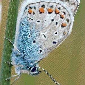 MyHobby borduurpakket - grijze vlinder