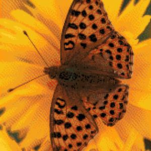 MyHobby borduurpakket - bruine vlinder op oranje bloem