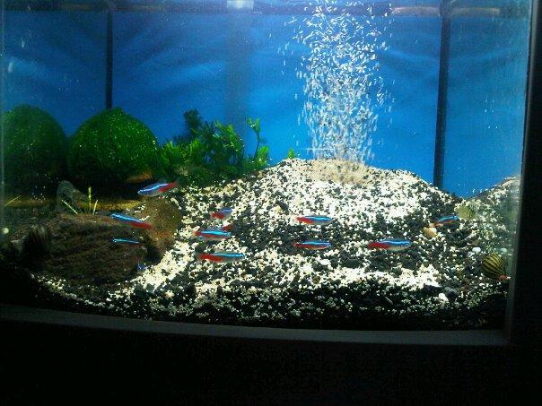 Galeri Aquarium  hobby aquatic