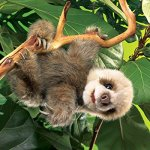 Folkmanis-Baby-Sloth-Hand-Puppet-0-1