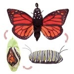 Folkmanis-Monarch-Life-Cycle-Reversible-Hand-Puppet-Plush-0-0