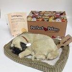 Perfect-Petzzz-XP91-09-Huggable-Pug-Puppy-0