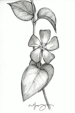 pencil flower easy drawings simple flowers drawing beginners inspiration sketches draw floral hobbylesson cartoondistrict source inspiring daffodil colors