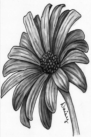 pencil drawings easy flower inspiration drawing flowers sketches sketch draw beginners sketching mexican